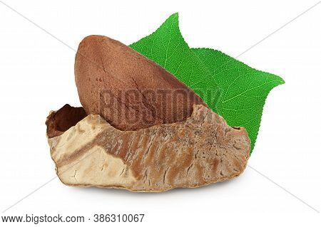 Brasil Nut In Nutshell Isolated On White Background With Clipping Path And Full Depth Of Field.