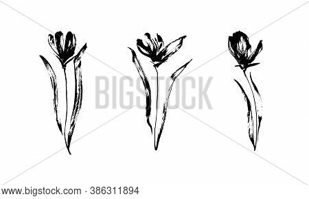 Set Of Three Hand Drawn Flowers With Leaves. Black Isolated Sketch Botanical Vector Illustration On