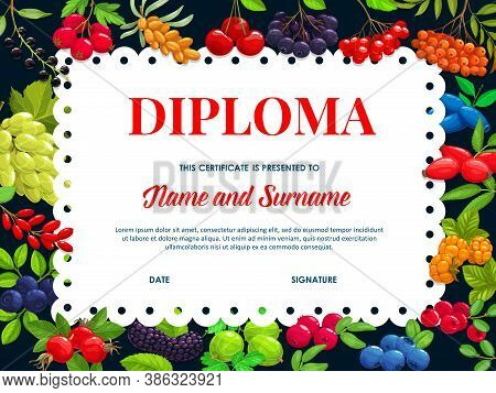 School Diploma Vector Template With Garden And Wild Berries Sea Buckthorn, Black Chokeberry And Cher