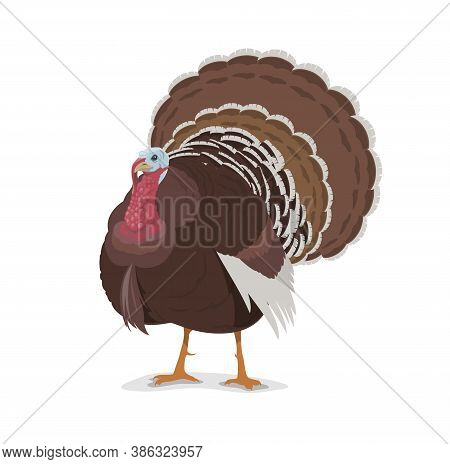 Turkey Vector Cartoon Mascot, Poultry Farm Fowl, Symbol Of Thanksgiving Day Holidays. Livestock Dome