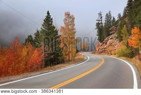 Colorful Aspen trees by Scenic Mt Evans road in Colorado