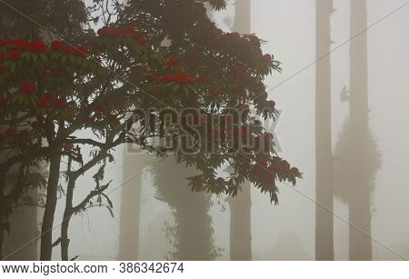 Beautiful Naturul View Of Tree & Flowers On A Misty Morning At Darjeeling,india.