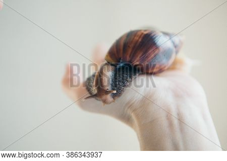 Model Holds Snail On Hand. Ads For Cosmetics, Anti-gravity Creams, Lip Treatments, Face Treatments,