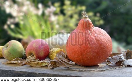 Little Pumpkin And Apples  In Leaves  On A Table In Garden