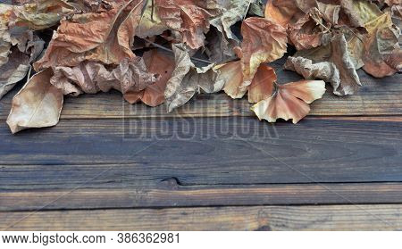 Brown Dead Leaves Of Various Tree On A Wooden Table