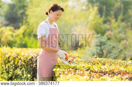 Woman Gardener Taking Care Of Garden. Trim And Cutting Plants For Smooth Hedge