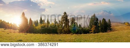 Foggy Autumn Landscape Panorama At Sunset. Spruce Trees On The Meadow In Evening Light. Mountain Beh