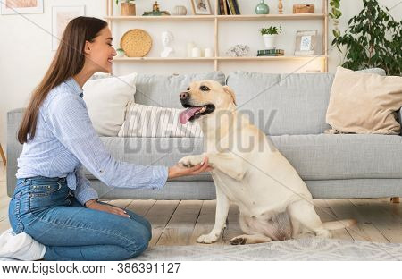 Contact Concept. Portrait Of Woman Teaching Her Dog A Command. Labrador Giving Paw To His Female Own