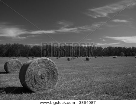 Fall Hay Bw 2