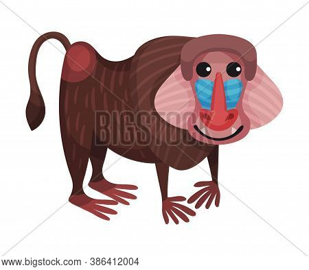 Mandrill Monkey Or Colourful Primate As African Animal Vector Illustration