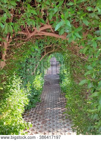 Walkway Lane Path With Green Trees And Bushes In Garden. Beautiful Alley In Park At Egypt