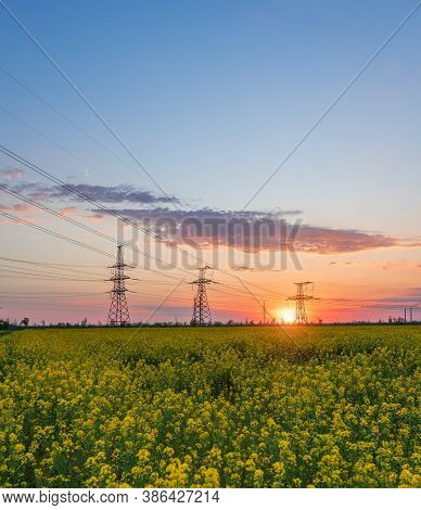 Power Lines And High-voltage Lines Against The Backdrop Of Blooming Oilseed Rape At Sunset. Green En