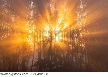 Sunrise With Sunrays Cutting Through Trees In Fog, Early Autumn Morning.