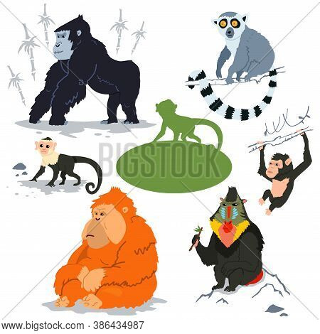Monkey Characters Vector Set. Cartoon Illustration Of A Gorilla, Capuchin, Lemur, Orangutan, Chimpan