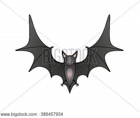 Bat - Vector Full Color Illustration. A Cute Gray Bat In Flight. The Flying Fox Is A Bats Mammal.