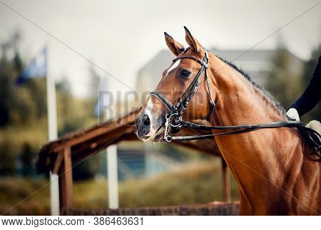 Portrait Sports Red Stallion  In The Double Bridle. The Neck Of A Sports Horse. Dressage Of Horses.