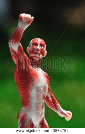 Muscle Man Front