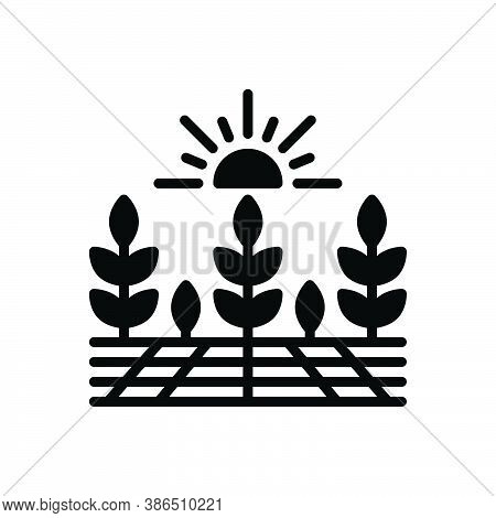 Black Solid Icon For Agricultural Farming Agrarian Predial Harvest Crops Prolificacy Yield