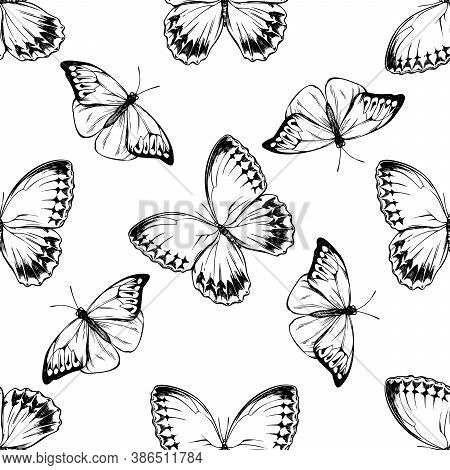Seamless Pattern With Black And White Great Orange-tip, Jungle Queens Stock Illustration