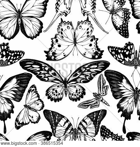 Seamless Pattern With Black And White Giant Swordtail, Lemon Butterfly, Red Lacewing, African Giant