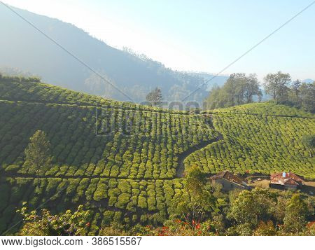 One Of The Beautiful Hill Stations In  Munnar- Kerala-india