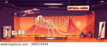 Dinosaur Skeleton In Museum Of History. Dino Tyrannosaurus Rex And Pterodactyl Fossils And Ancient A