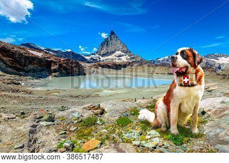 Saint Bernard Rescue Dog With Keg Of Brandy In Alpine Meadows Around Matterhorn Peak. Mount Cervin O