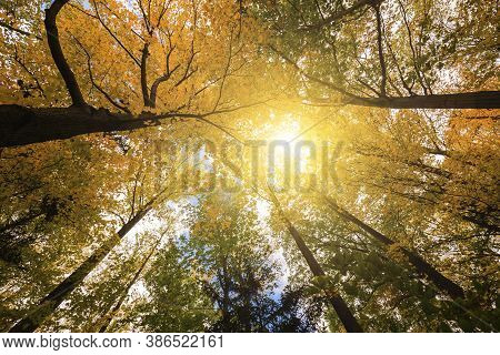 Low Angle Of A Forest In Autumn, Dense Woods With Thick Canopies In Sunny Autumn Weather, Low Angle