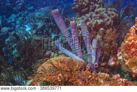 Caribbean Coral Reef Off The Coast Of The Island Of Bonaire