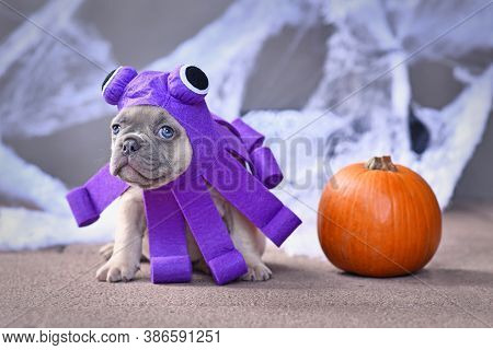 Funny French Bulldog Puppy Wearing Halloween Octopus Dog Costume With Funny Eyes In Front Of Traditi