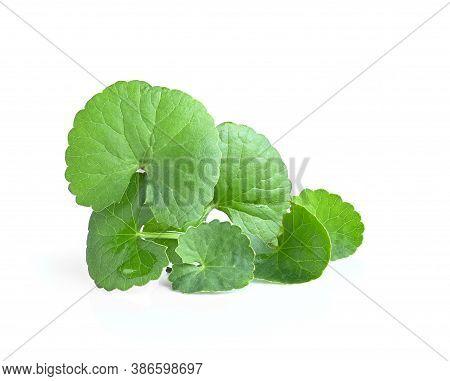 Centella Asiatica(linn.), Asiatic Pennywort Leave  ;gotu Kola Leave On White Background.