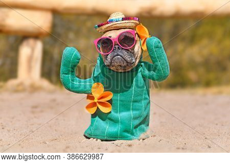 Funny French Bulldog Dog Dressed Up With Cactus Costume With Fake Arms And Orange Fowers Wearing Sum