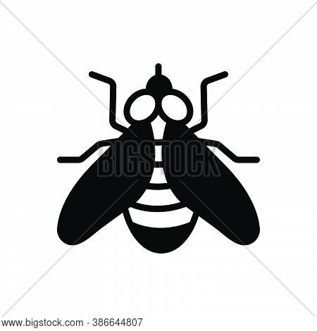 Black Solid Icon For Fly Housefly Drake Blowfly Muzzle Sight Bug Insecticide Dirty Prejudicial Critt