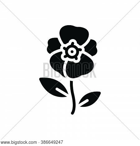 Black Solid Icon For Balsam Smear Ointment Fragrance Impatiens Blossom Flower Botanical Delicate Cri