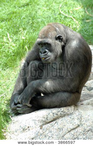Ape Snack