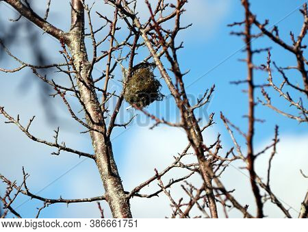 Bird's Nest On The Branch Of Tree And Blur Sky Background. It Is A Structure Or Place Made Or Chosen