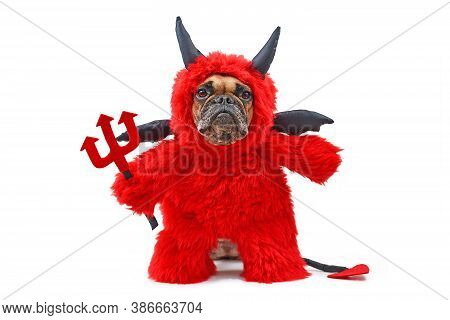 French Buldog Dog With Red Devil Halloween Costum Wearing A Fluffy Full Body Suit With Fake Arms Hol