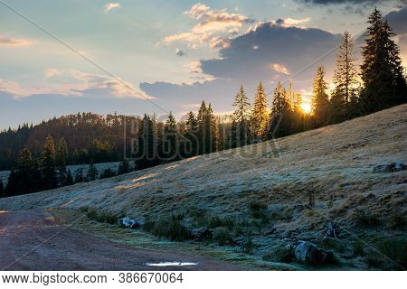 Coniferous Forest In Autumn At Sunrise. Dry Grass In Hoarfrost On The Hillside Meadow. Clouds On The