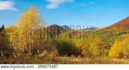 Yellow Autumnal Landscape In Mountains. Beautiful Nature Scenery With Beech Forest In Yellow Foliage