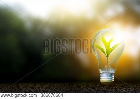 Renewable Energy Concept Earth Day Or Environment Protection Hands Protect Forests That Grow On The