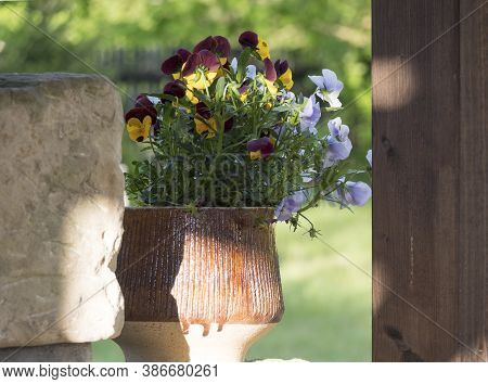 Blue, Yellow And Purple Pansy Flowers In Rustic Caramic Clay Pot On Garden Wall, Selective Focus
