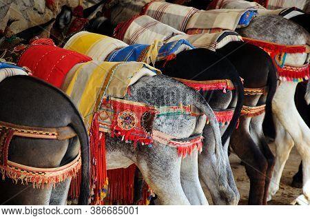 Row Of Burro Taxi Donkeys, Mijas, Costa Del Sol, Malaga Province, Andalucia, Spain, Europe.