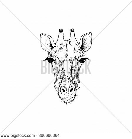 Vector Image The Giraffe Head On The White Background, Giraffe Logo, Giraffe Head Tattoo, Vector Gir