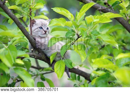 Small kitten cat with blue ayes stuck on green tree on garden. Animal pets photography