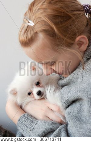 A Girl With Blonde Hair In A Gray Sweater Holds A White, Fluffy Pomeranian Puppy In Her Arms, Hugs T