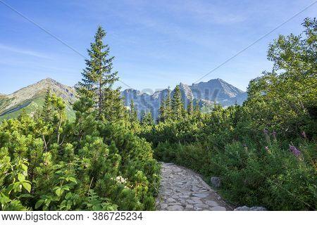Mountain Trail Between Lush Vegetation. Tatry. Poland.