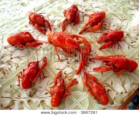 poster of Several small boiled red cancers are located around big cancer on table