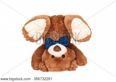 Friendly Brown Teddy Bear With Blue Bow Staying In Handstand Isolated On White. Photography For Chil
