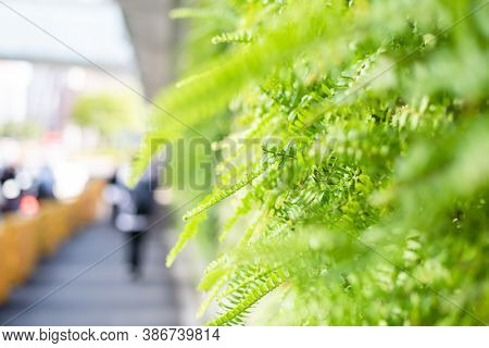green fern with leaves on the wall with shallow depth focus
