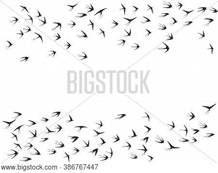 Flying Swallow Birds Silhouettes Vector Illustration. Nomadic Martlets Group Isolated On White. Pini